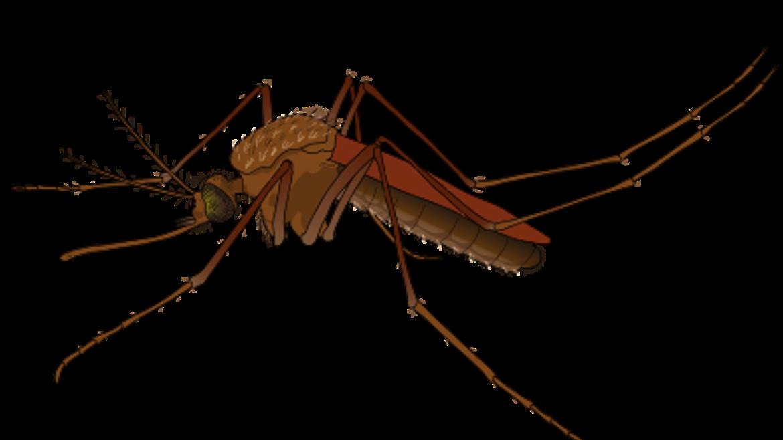 Uncomplicated and Severe Malaria.
